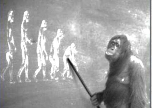 کاریکاتور میمون درباره تکامل