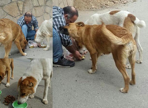لحظه نگار - تصاویر سگ ها