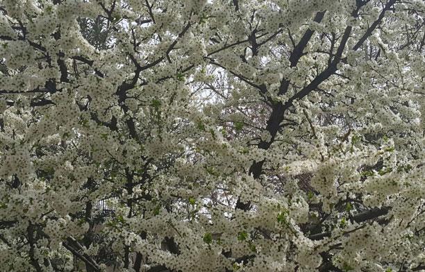 لحظه نگار - بهار