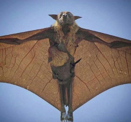 لحظه نگار - تصویر خفاش پرنده