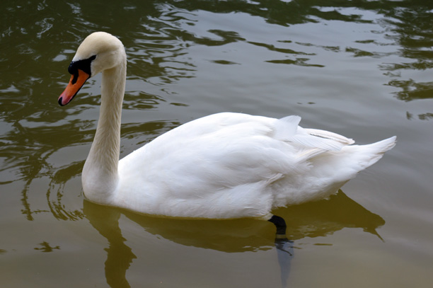 لحظه نگار -عکس قوی سفید در دریاچه