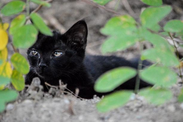 عکس گربه همسایه