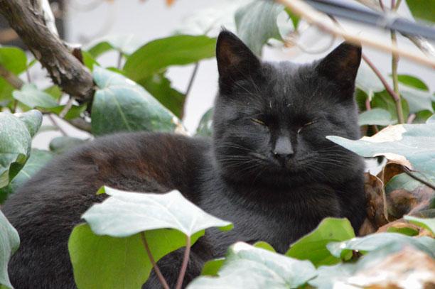 لحظه نگار - گربه سیاه خواب - خوابیده - محمدرضا شعبانعلی