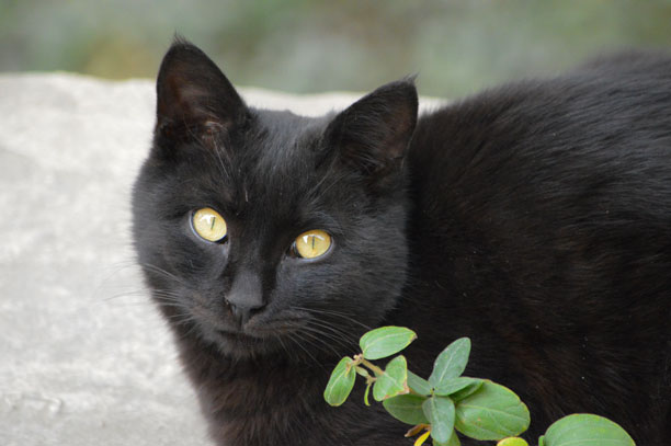 َعکس گربه سیاه - لحظه نگار- محمدرضا شعبانعلی
