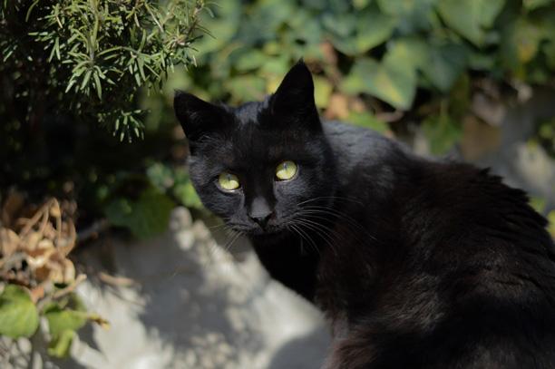 لحظه نگار - محمدرضا شعبانعلی - زغالچه - گربه سیاه