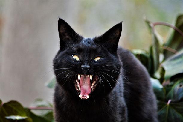 لحظه نگار - محمدرضا شعبانعلی - زغال : گربه سیاه عصبانی