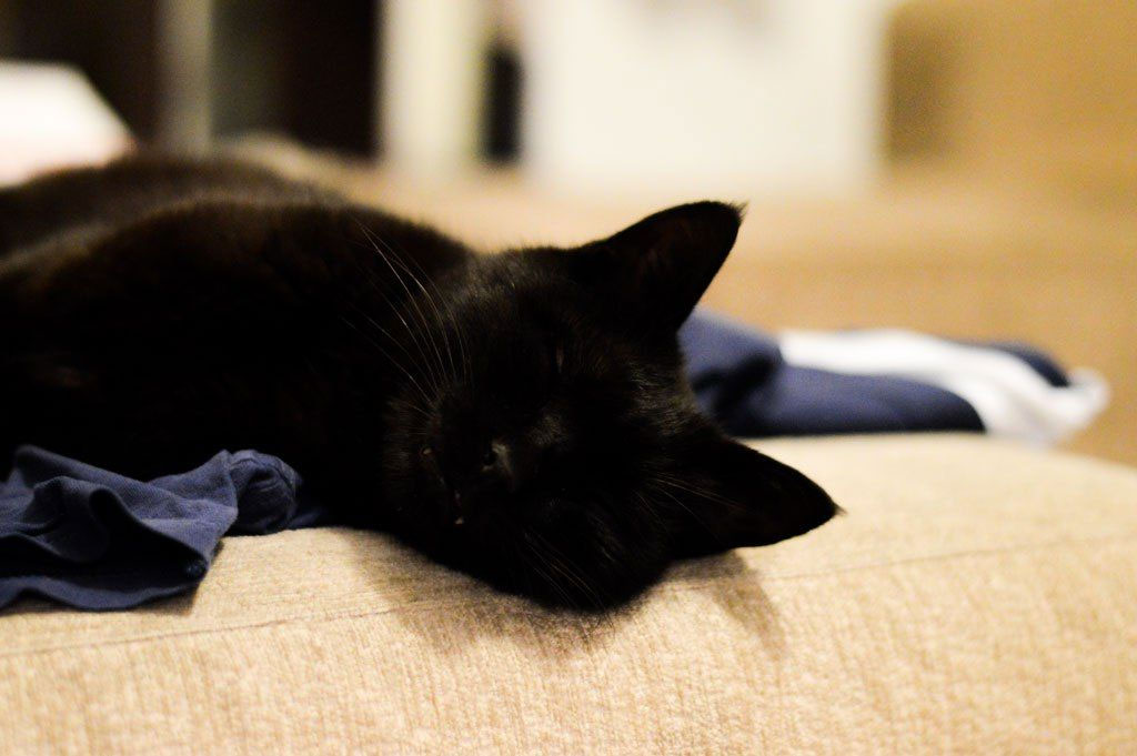 زغال - گربه شعبانعلی