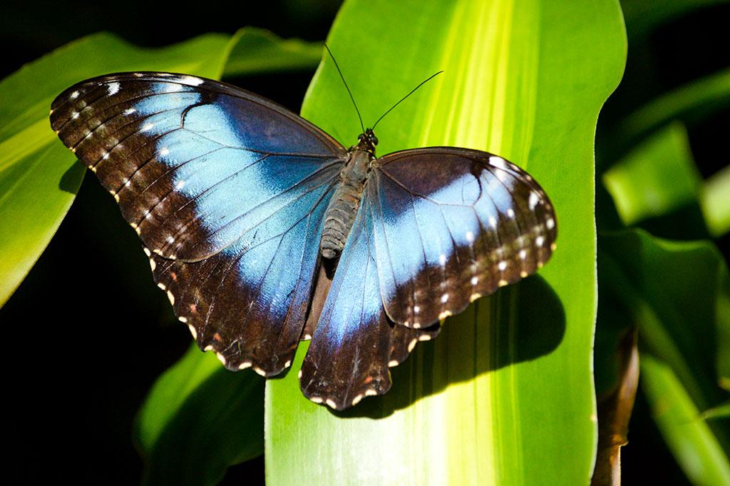 َعکس و تصاویر پروانه ها