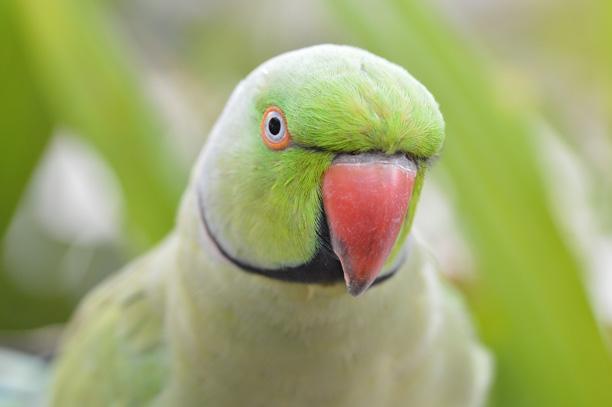 عکس طوطی ها