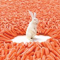 rabbit-and-carrot-thumb