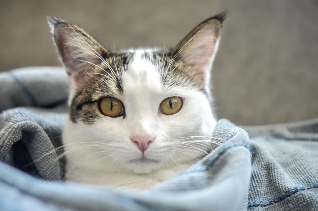 گربه - حمایت از حیوانات شهری