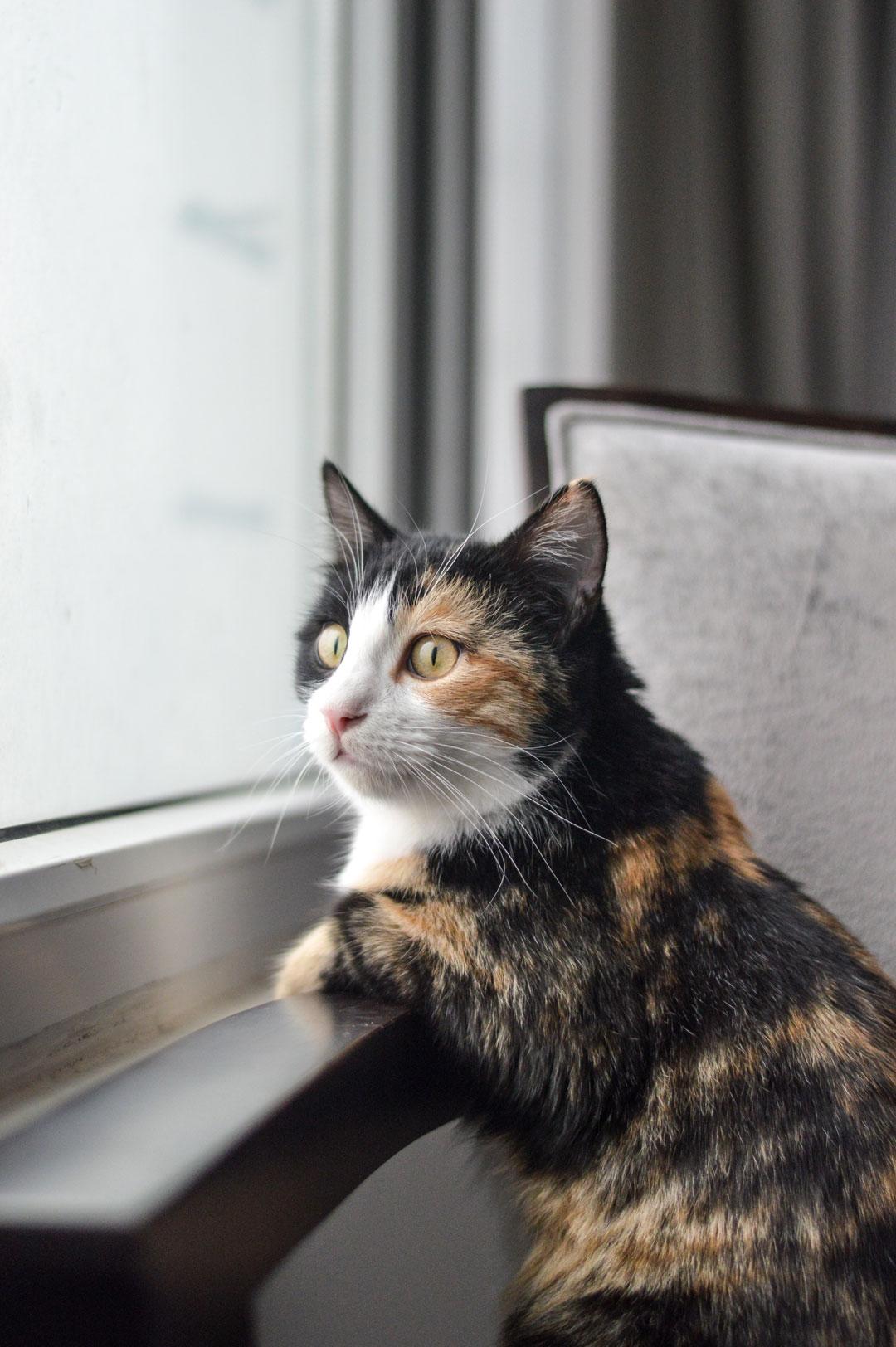 گربه محمدرضا شعبانعلی